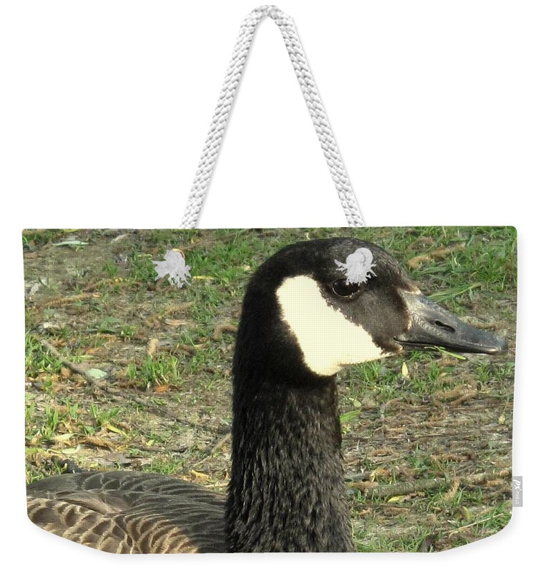 Canada Weekender Tote Bag featuring the photograph Canada Goose by Ian MacDonald