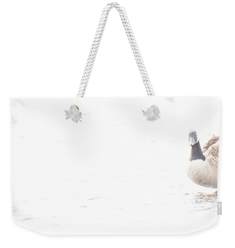 Canada Goose Weekender Tote Bag featuring the digital art Canada Goose In Salt Marsh, Digital Art by A Gurmankin