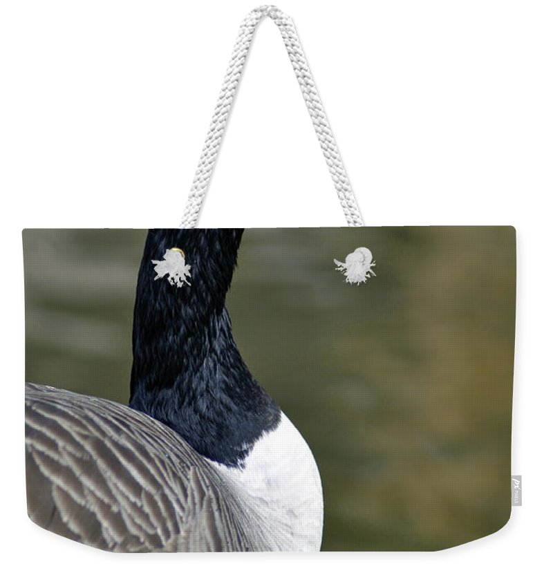 Bird Weekender Tote Bag featuring the photograph Canada Goose Portrait by Rod Johnson