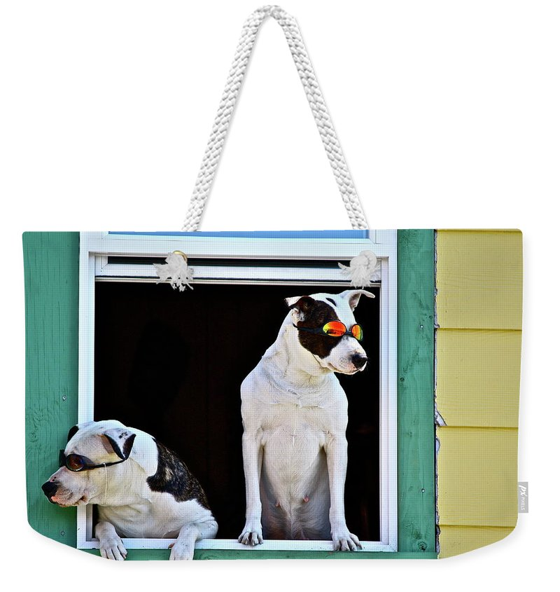 Animals Weekender Tote Bag featuring the photograph Canine Comedians by Diana Hatcher
