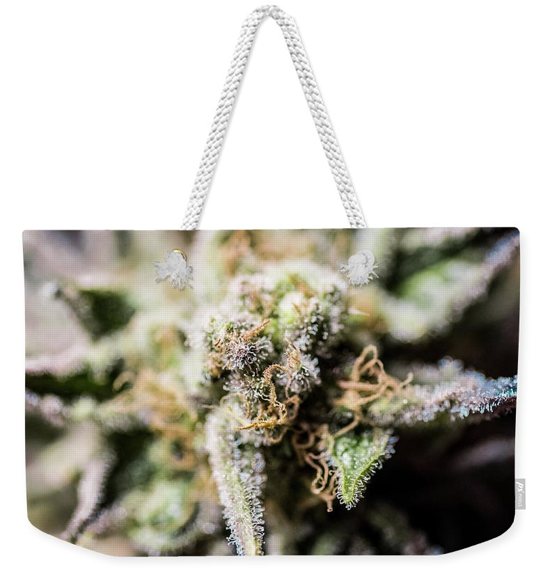 Cannabis Weekender Tote Bag featuring the photograph Cannabis Macro by Mitch McMaster