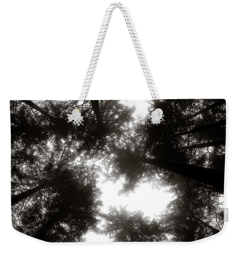 Trees Weekender Tote Bag featuring the photograph Canopy by Dave Bowman