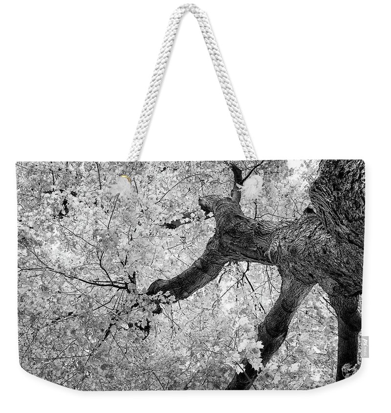 Abstract Weekender Tote Bag featuring the photograph Canopy Of Autumn Leaves In Black And White by Tom Mc Nemar