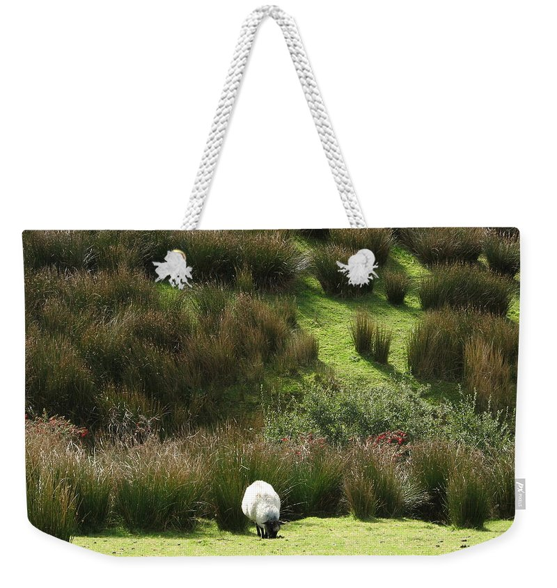 Sheep Weekender Tote Bag featuring the photograph Caora by Kelly Mezzapelle