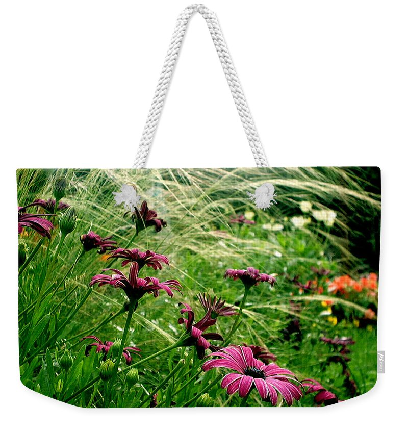 Flora Weekender Tote Bag featuring the photograph Cape Daisies And Angel Hair by Susan Baker