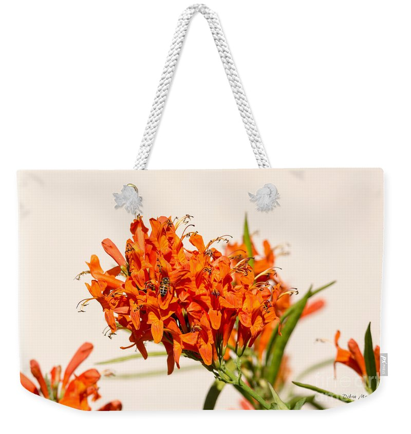 Cape Honeysuckle Weekender Tote Bag featuring the photograph Cape Honeysuckle - The Autumn Bloomer by Debra Martz