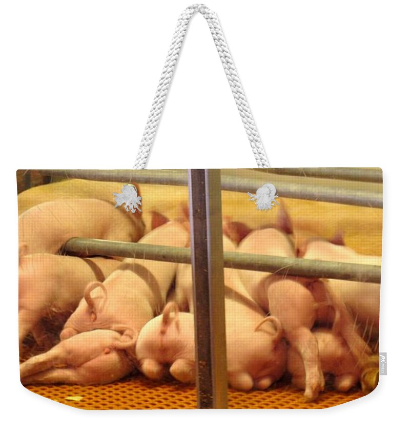 Pig Weekender Tote Bag featuring the photograph Capitalist Swine by Ian MacDonald