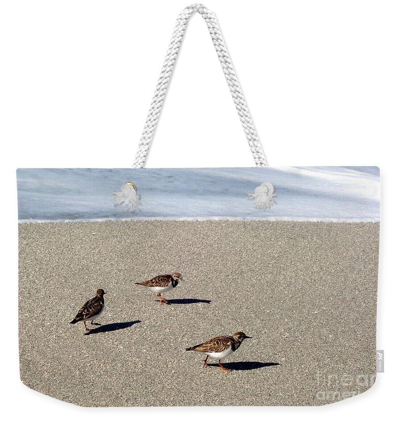 Beach Weekender Tote Bag featuring the photograph Captiva Brids by Elizabeth Klecker