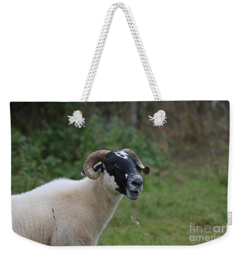 Sheep Weekender Tote Bag featuring the photograph Captivating Horned Sheep On A Farm In Ireland by DejaVu Designs