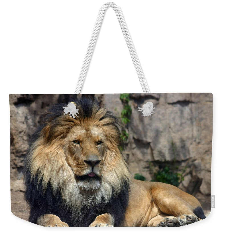 Lion Weekender Tote Bag featuring the photograph Captive Pride by Anthony Jones