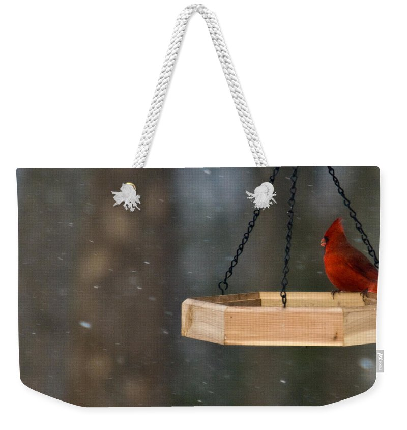 Cardinal Weekender Tote Bag featuring the photograph Cardinal Feeding In Snow by Douglas Barnett