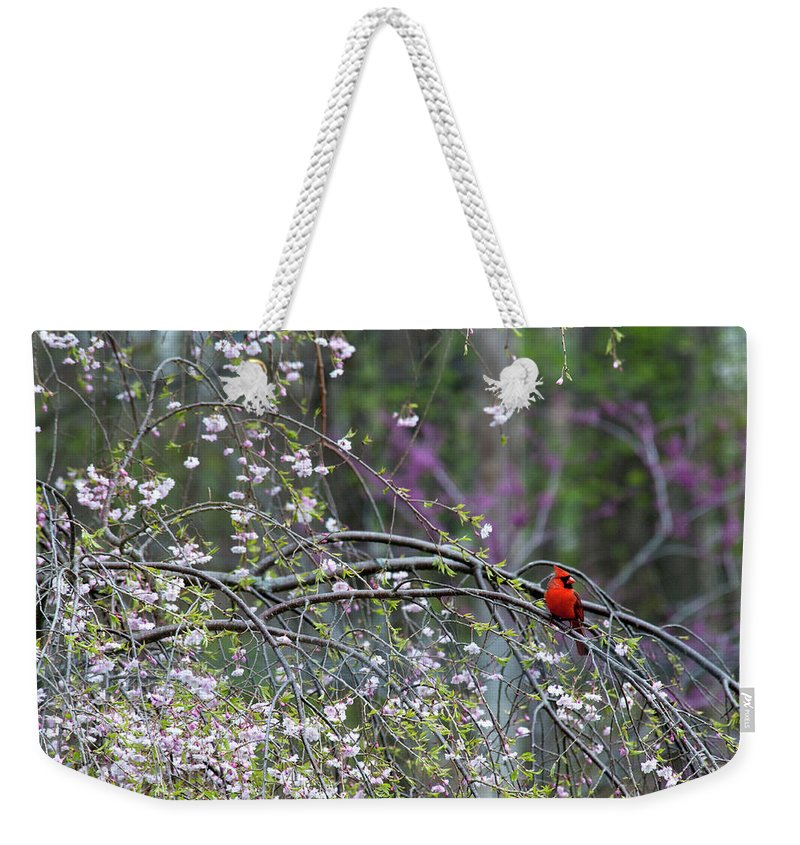 Bird Weekender Tote Bag featuring the photograph Cardinal In Flowering Tree by David Arment