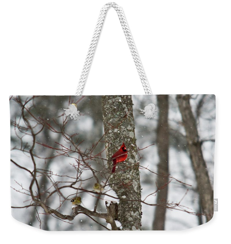 Cardinal Weekender Tote Bag featuring the photograph Cardinal In Snow Storm by Douglas Barnett