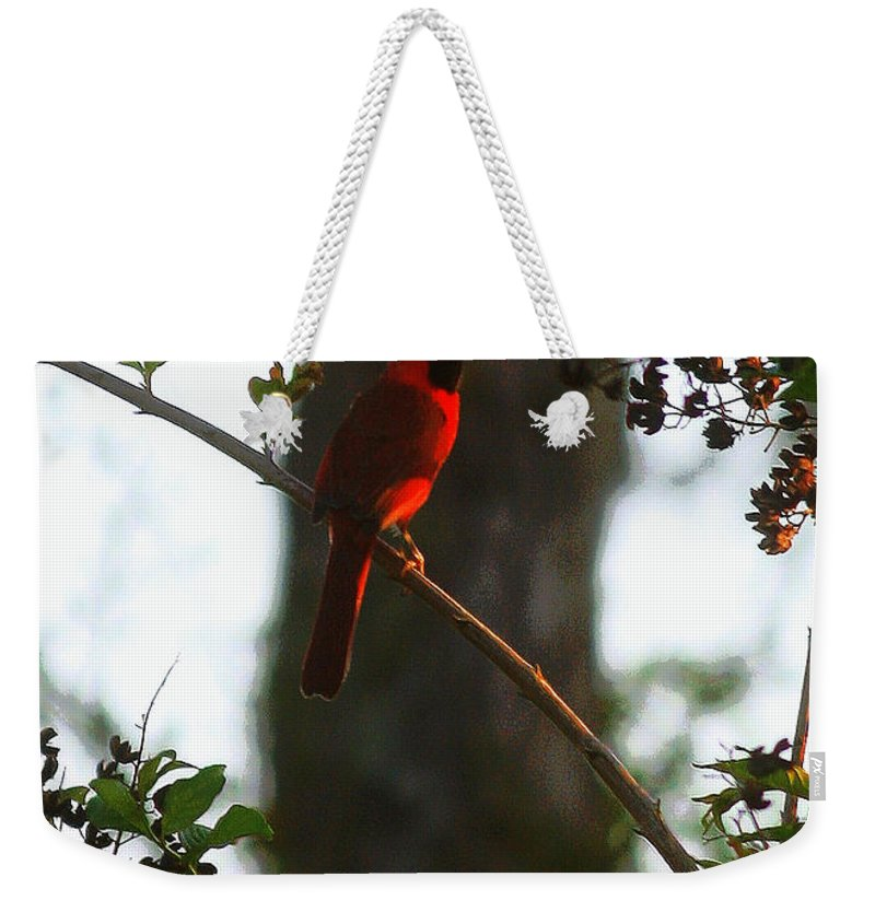 Cardinal Weekender Tote Bag featuring the photograph Cardinal In The Crepe Myrtle by Carol Groenen
