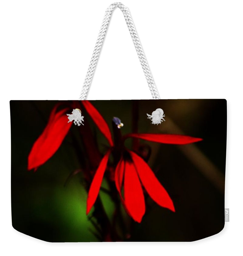 Digital Photograph Weekender Tote Bag featuring the photograph Cardinal Plant by David Lane