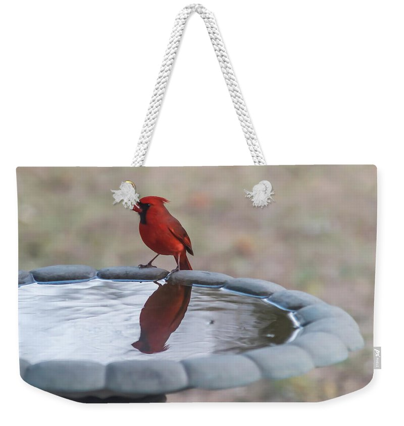 Terry Deluco Weekender Tote Bag featuring the photograph Cardinal Reflection by Terry DeLuco