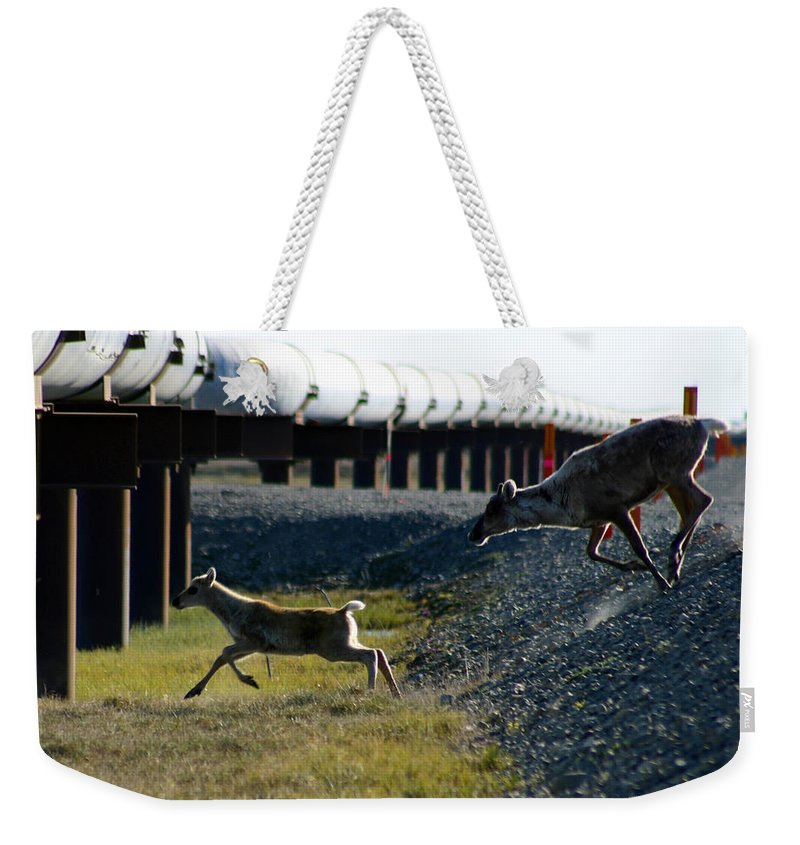 Caribou Weekender Tote Bag featuring the photograph Caribou Cow And Fawn by Anthony Jones