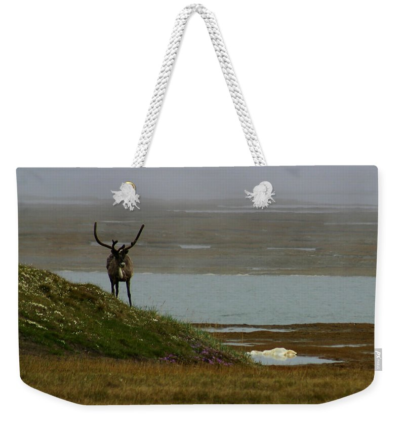 Caribou Weekender Tote Bag featuring the photograph Caribou Fog by Anthony Jones