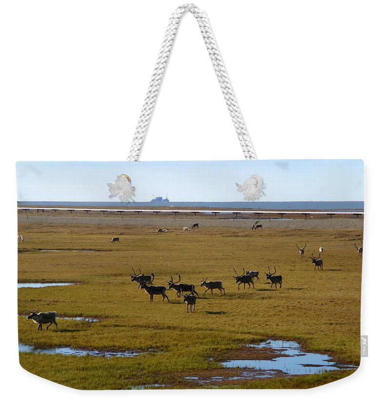 Caribou Weekender Tote Bag featuring the photograph Caribou Herd by Anthony Jones