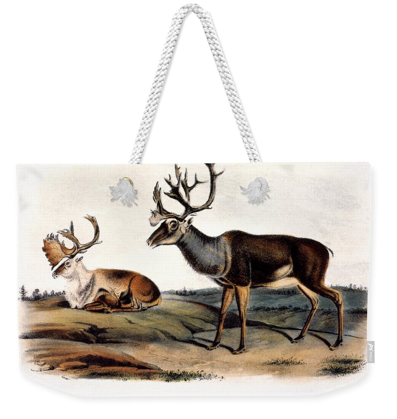1846 Weekender Tote Bag featuring the photograph Caribou (rangifer Caribou): by Granger