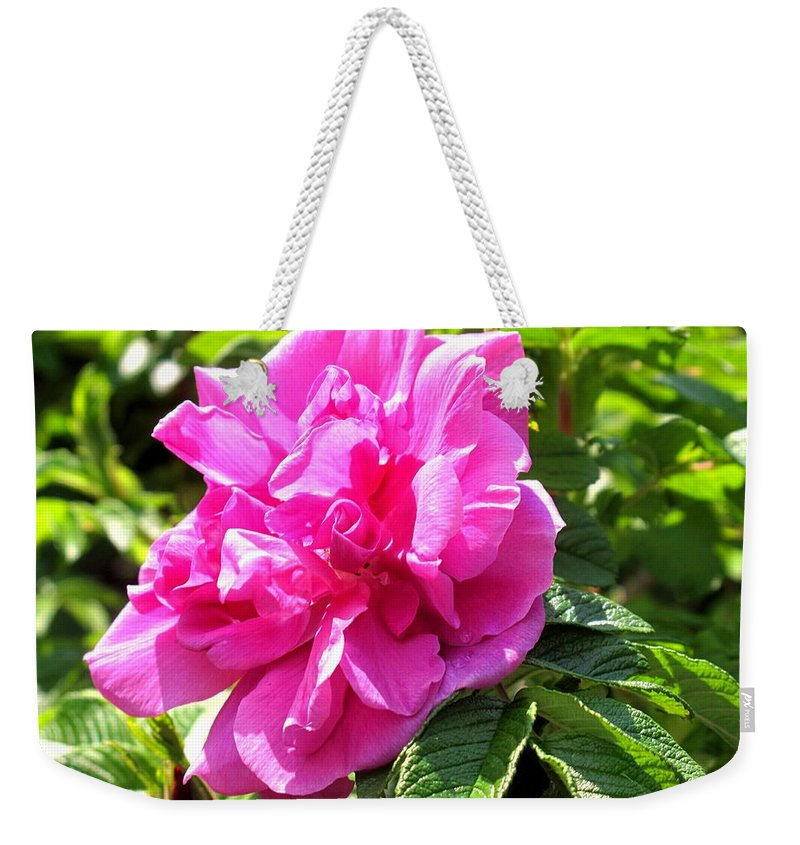 Rose Weekender Tote Bag featuring the photograph Carmen by Ian MacDonald