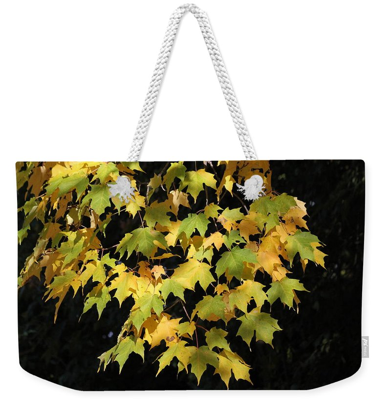 Leaves Weekender Tote Bag featuring the photograph Cascading Leaves by Doris Potter
