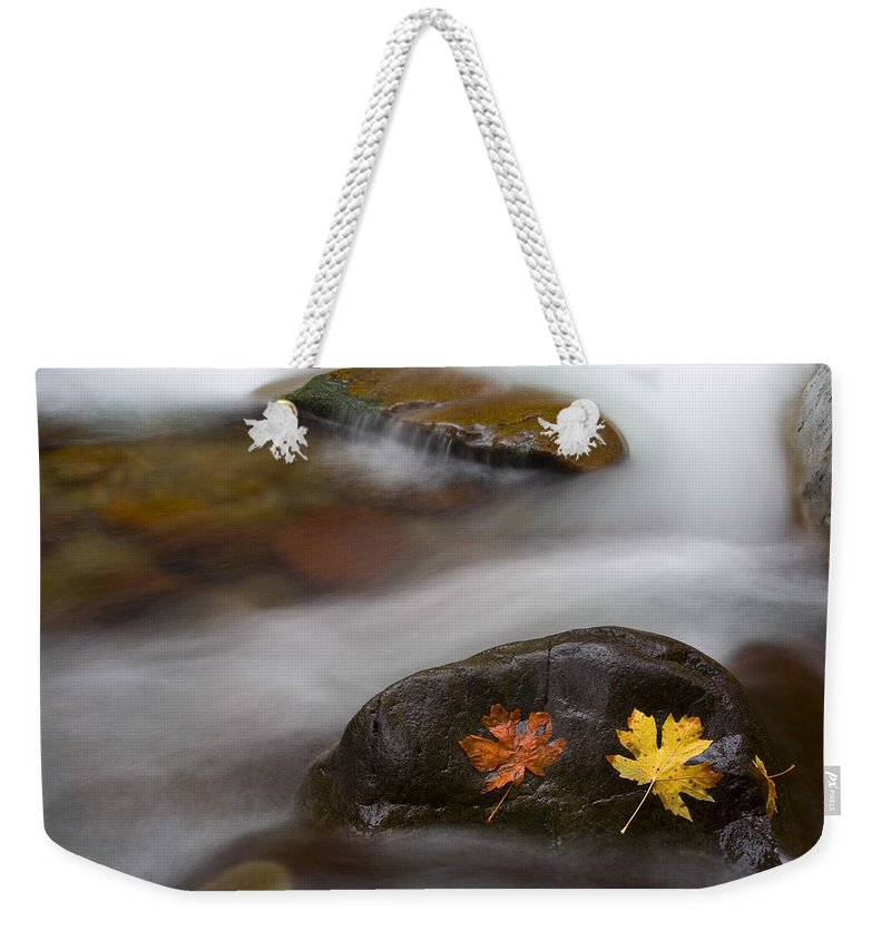 Leaves Weekender Tote Bag featuring the photograph Castaways by Mike Dawson