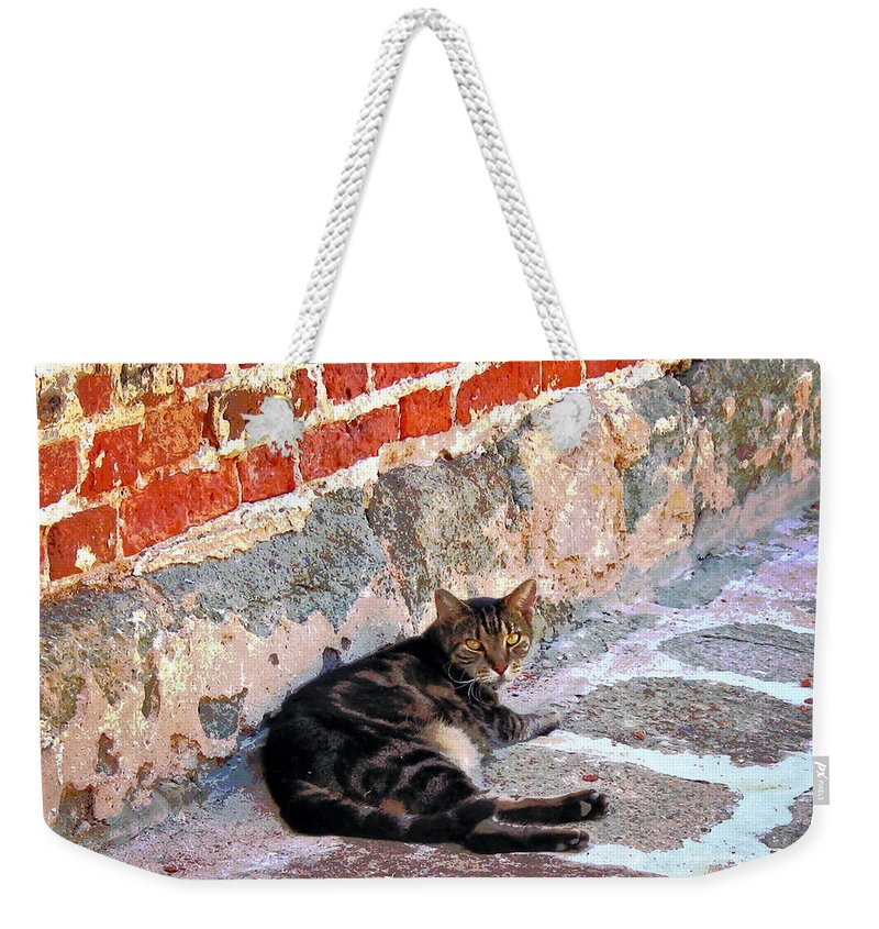 Cats Weekender Tote Bag featuring the photograph Cat Against Stone by Susan Savad