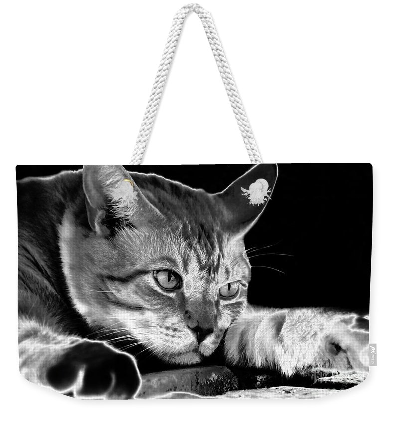 Cat Weekender Tote Bag featuring the photograph Cat Eyes by David Lee Thompson
