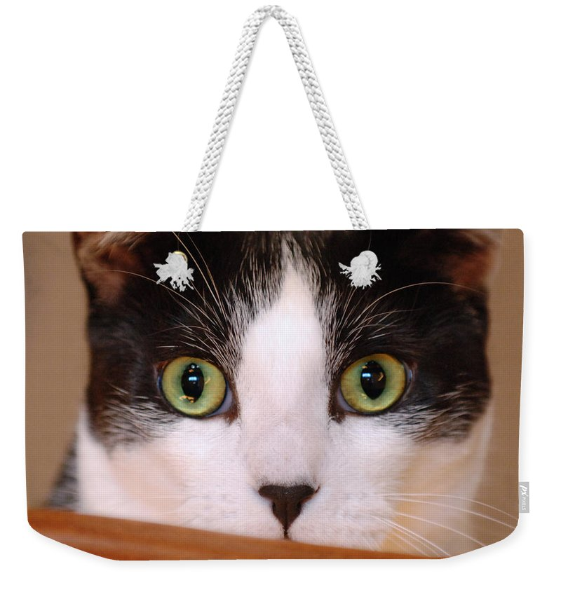 Pet Weekender Tote Bag featuring the photograph Cat Eyes by Jill Reger