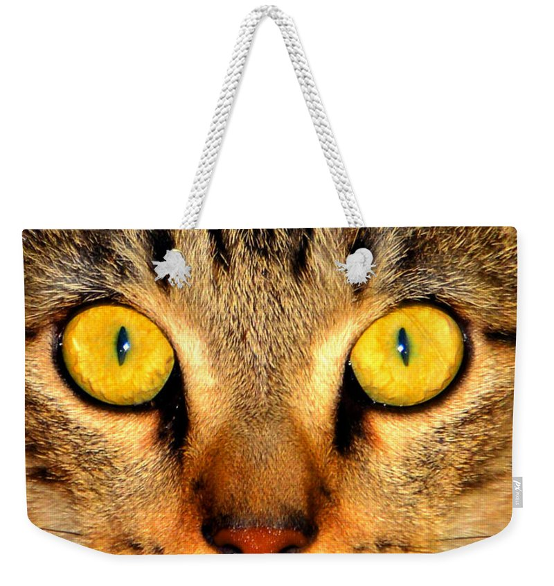 Cat Weekender Tote Bag featuring the photograph Cat Face Portraiture by David Lee Thompson