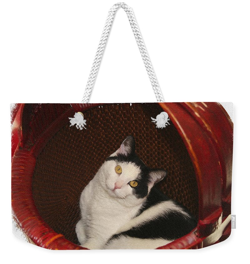 Cat Weekender Tote Bag featuring the photograph Cat In A Basket by Margie Wildblood
