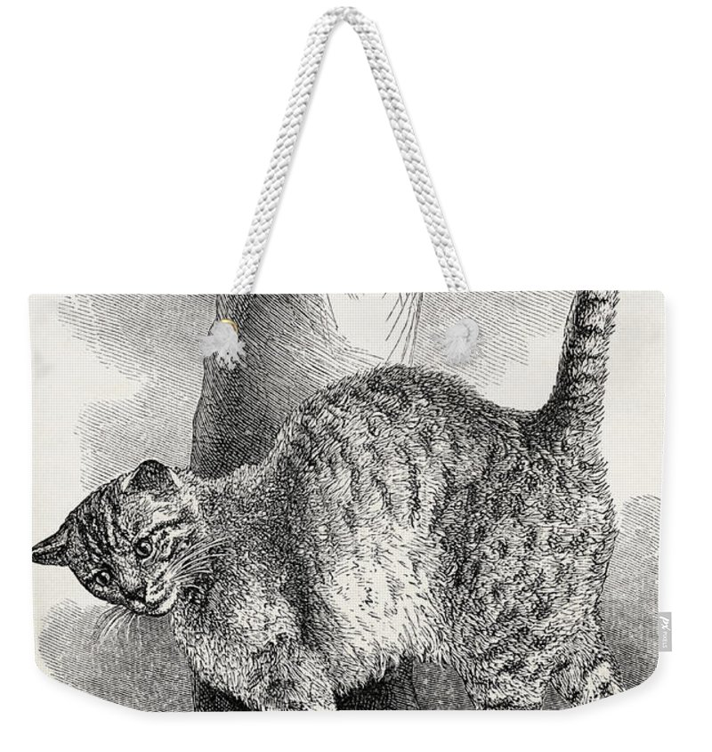 Animal Weekender Tote Bag featuring the drawing Cat In An Affectionate Frame Of Mind by Thomas W Wood