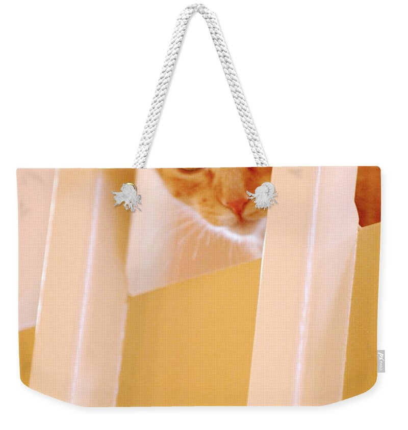 Animal Weekender Tote Bag featuring the photograph Cat Spy by Jill Reger