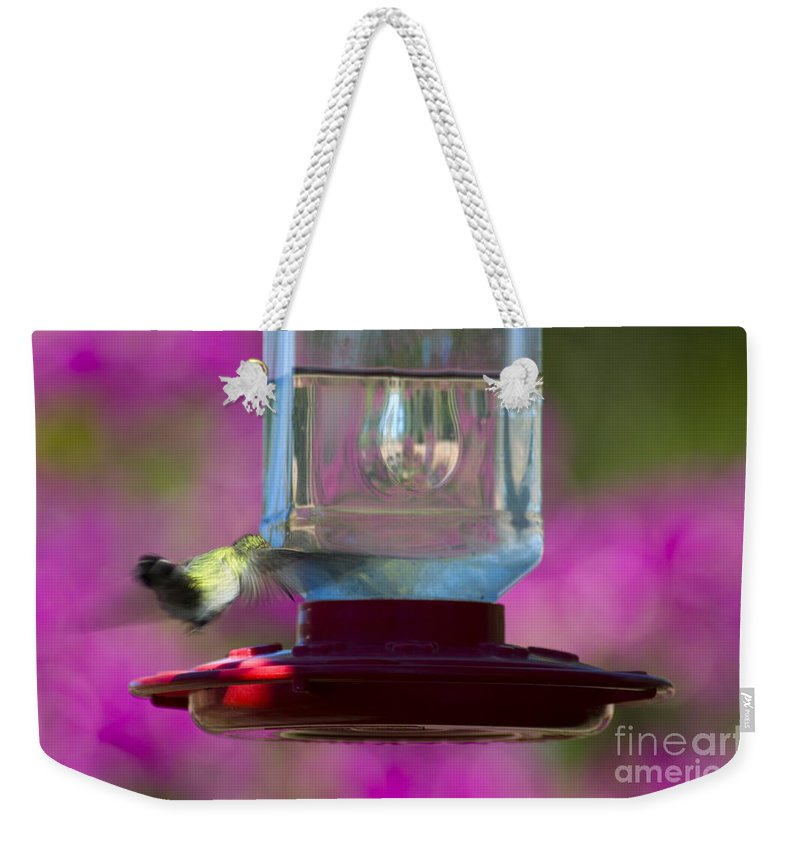 Clay Weekender Tote Bag featuring the photograph Catch Me If You Can by Clayton Bruster