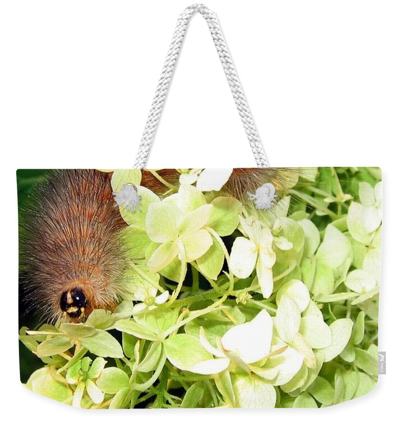 Caterpillar Weekender Tote Bag featuring the photograph Caterpillar by Will Borden
