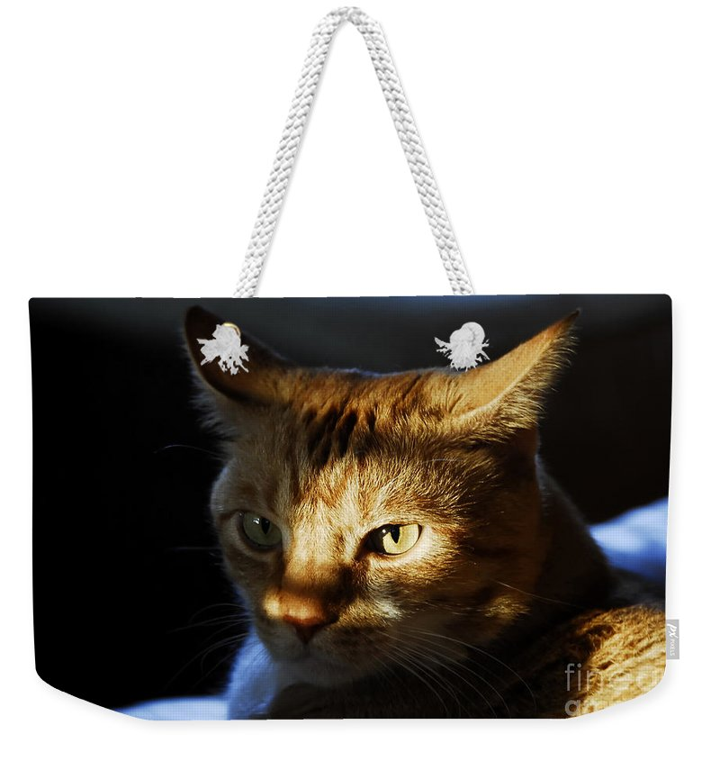 Cat.feline Weekender Tote Bag featuring the photograph Catfish by David Lee Thompson