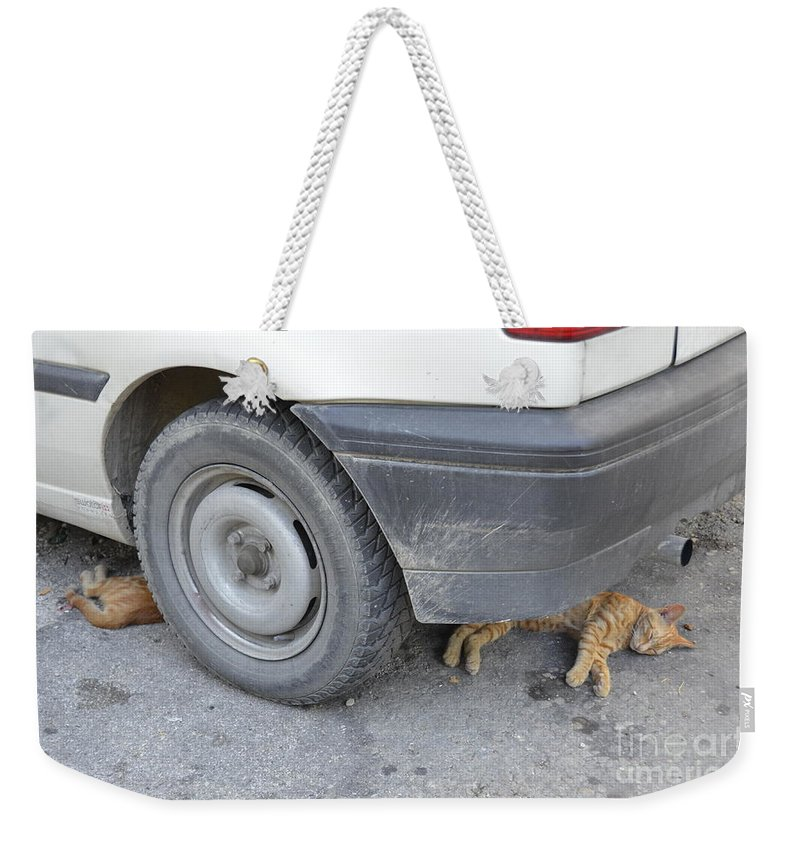 Cat Weekender Tote Bag featuring the photograph Cats Cats by Elaine Berger