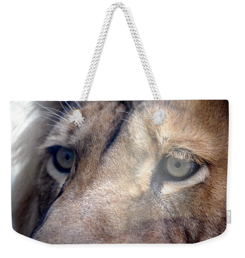 Lion Weekender Tote Bag featuring the photograph Cats Eyes by Lisa Kane