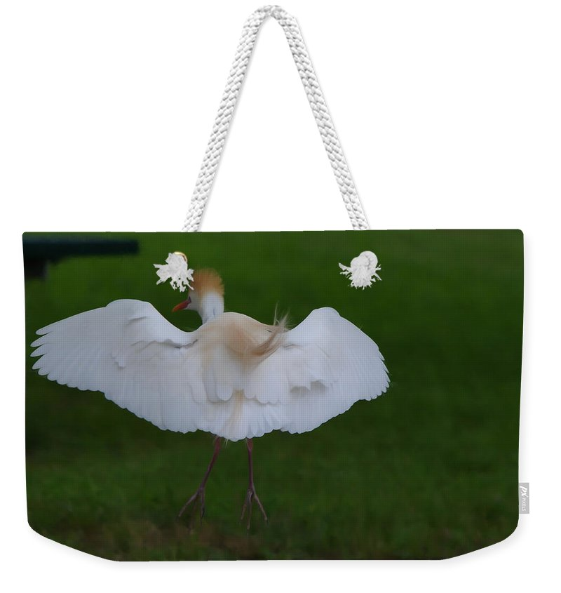 Roy Williams Weekender Tote Bag featuring the photograph Cattle Egret Prepared For Landing - Digitalart by Roy Williams