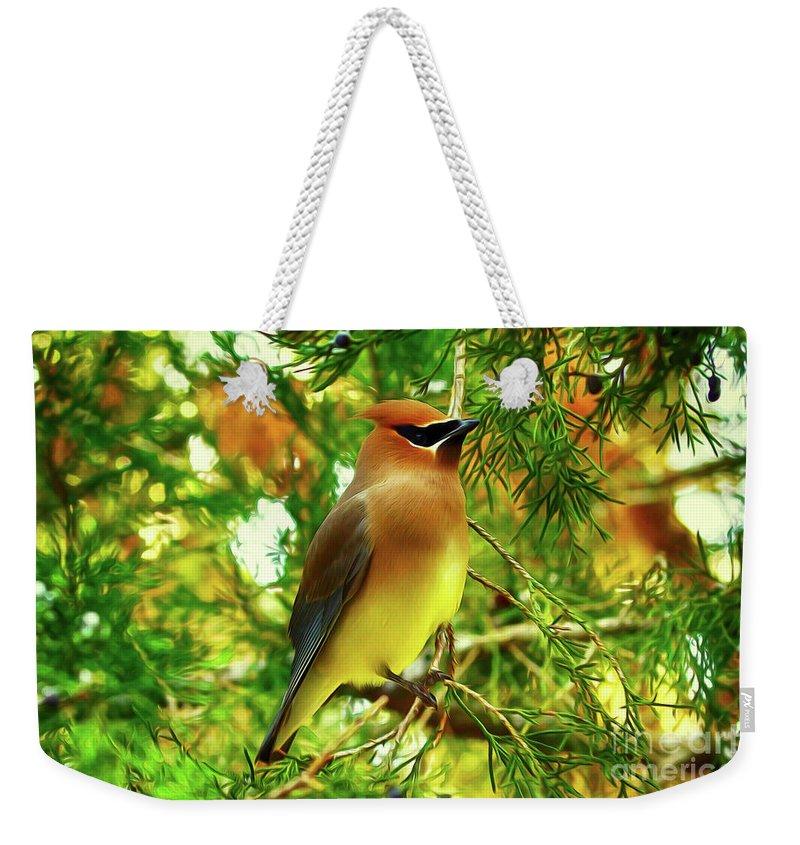 Birds Weekender Tote Bag featuring the digital art Cedar Waxwing Beauties 11 by Kim Pate