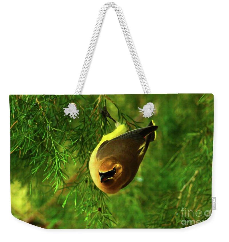 Birds Weekender Tote Bag featuring the digital art Cedar Waxwing Beauties 9 by Kim Pate