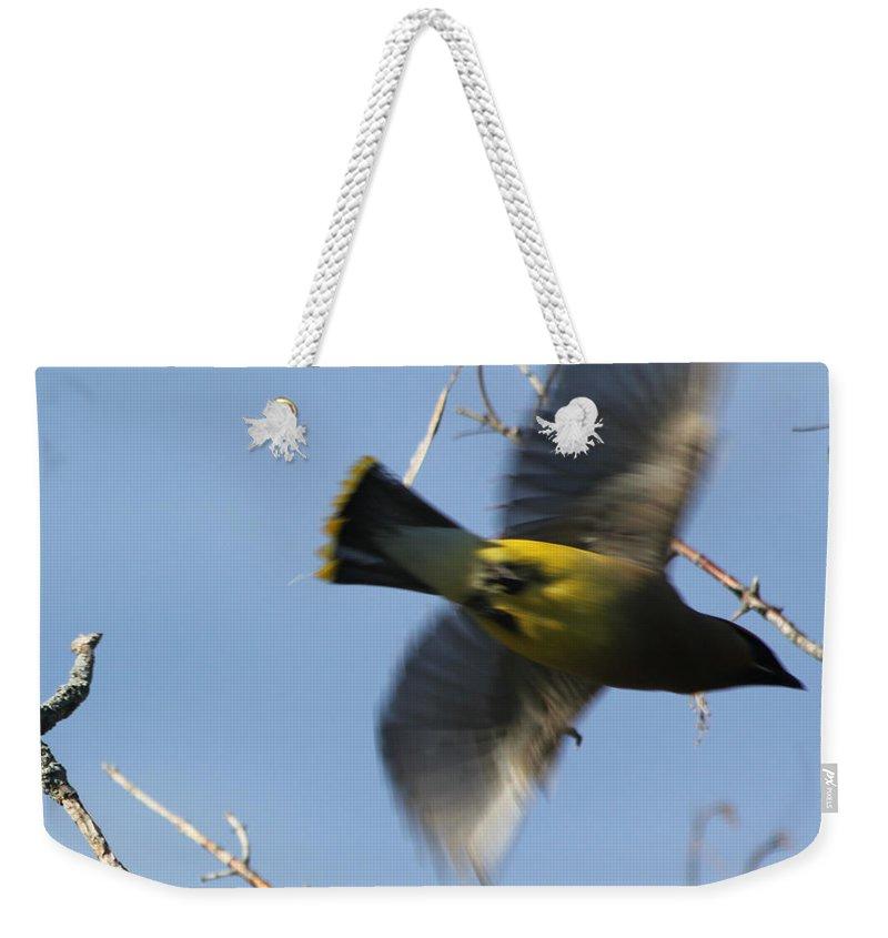Cedar Waxwing Weekender Tote Bag featuring the photograph Cedar Waxwing In Flight by Lauri Novak