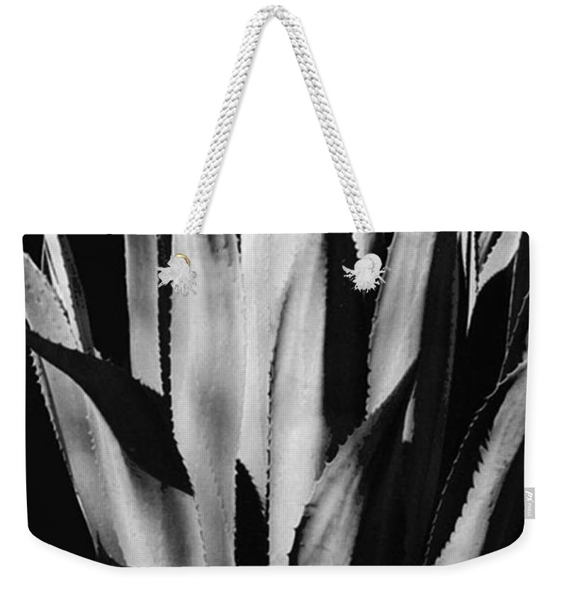 Plants Of The Southwest Weekender Tote Bag featuring the photograph Century Plant by Jim Smith