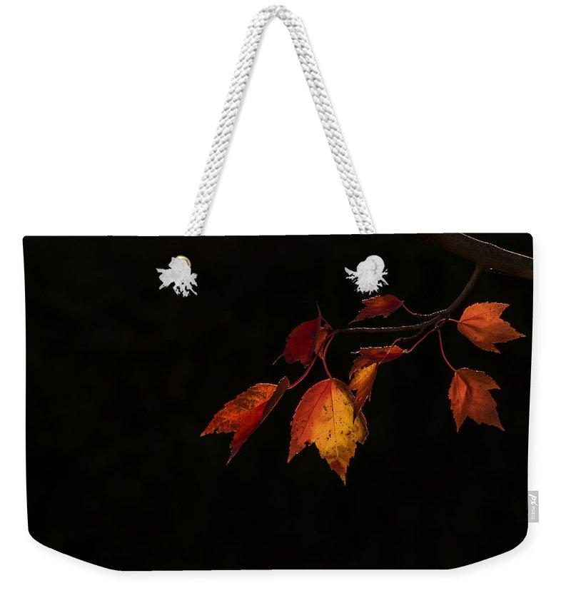 Terry D Photography Weekender Tote Bag featuring the photograph Changing Color Fall Maple Leaves On Black by Terry DeLuco