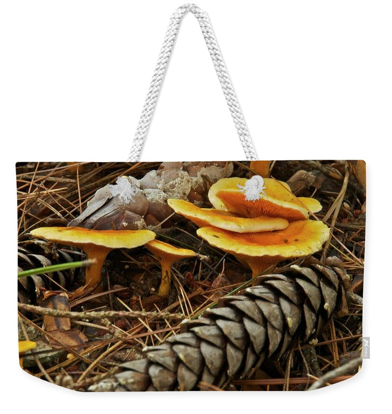 Chanterelle Mushroom Mushrooms Fungus Fungi Edible Pine Cones Pine Needles Forest Decay Nature Mgp Photography Michael Peychich Yellow Brown Michigan Autumn Weekender Tote Bag featuring the photograph Chanterell Mushrooms by Michael Peychich