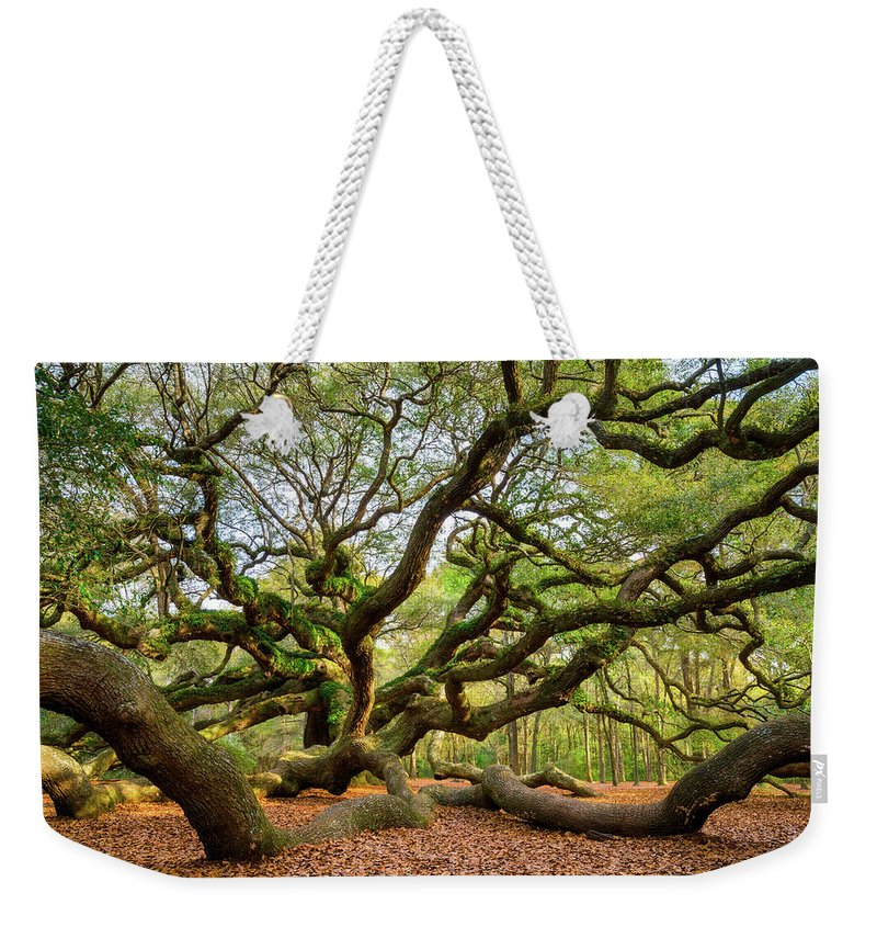 Charleston Weekender Tote Bag featuring the photograph Charleston Sc Angel Oak Tree South Carolina Landscape by Dave Allen