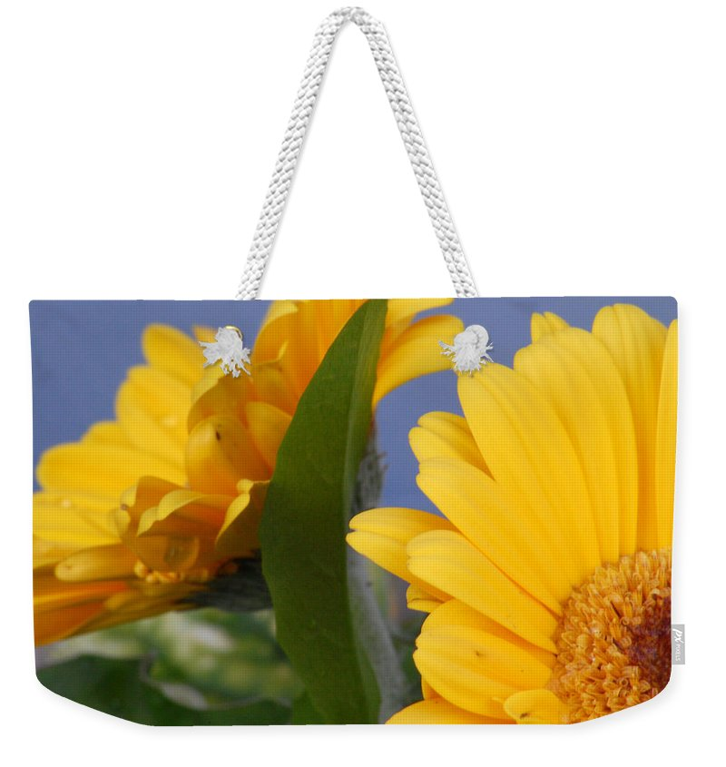 Gerbera Daisy Weekender Tote Bag featuring the photograph Cheerful Gerbera Daisies by Amy Fose