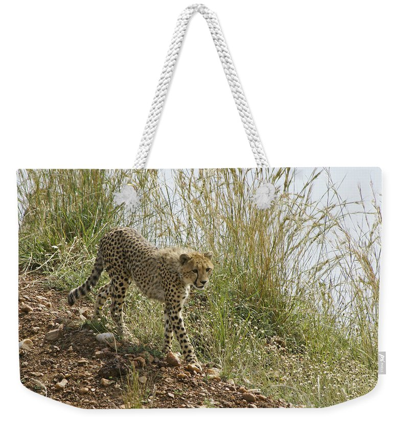Africa Weekender Tote Bag featuring the photograph Cheetah Exploration by Michele Burgess