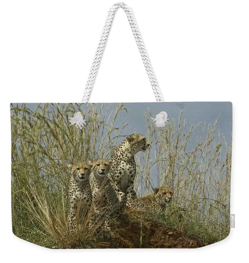 Africa Weekender Tote Bag featuring the photograph Cheetah Family by Michele Burgess